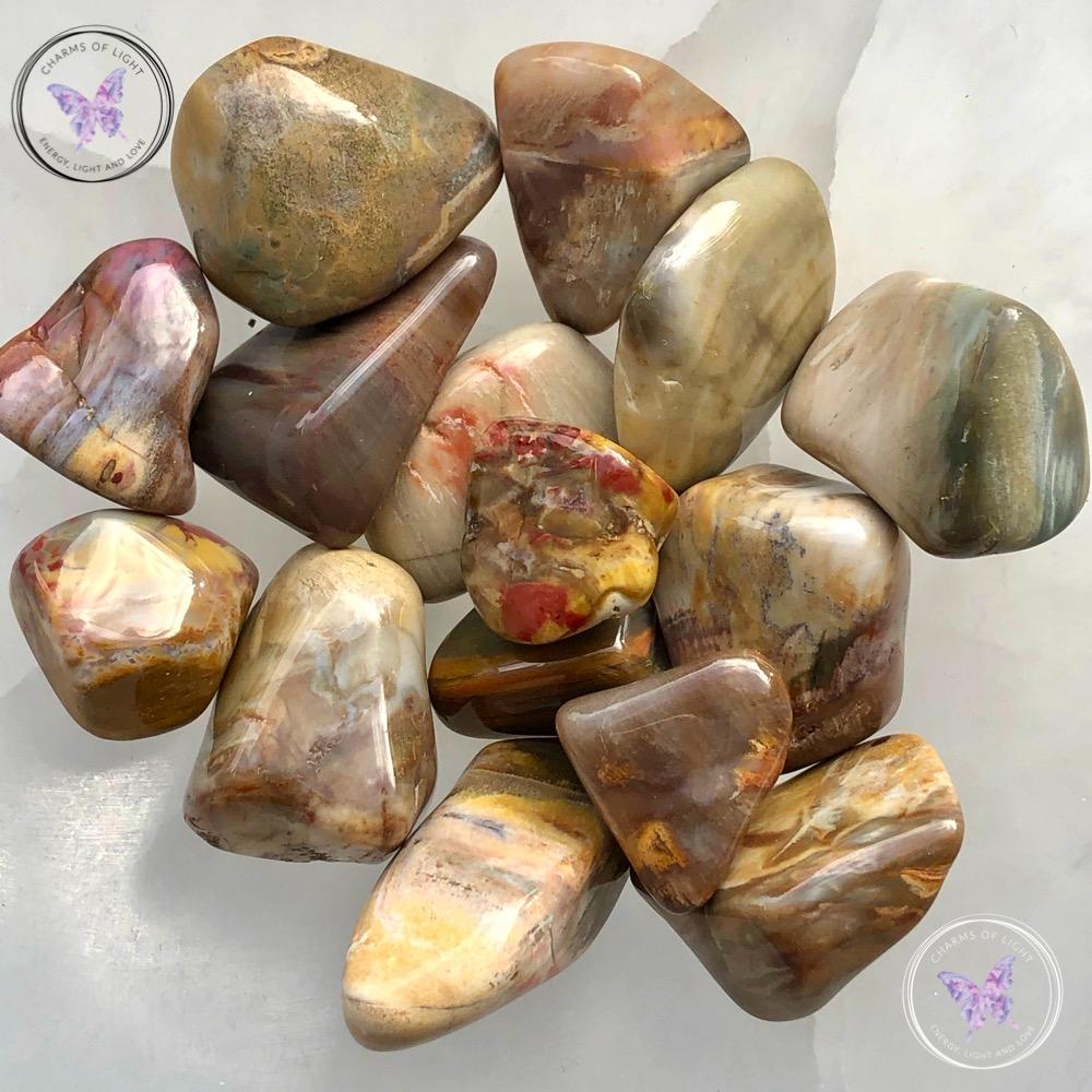 Petrified Wood Tumble Stones